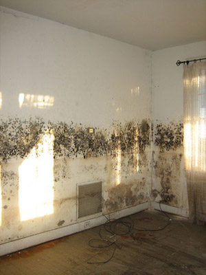 Mold Often Resides In Humid Damp Moisture Rich Environments Any Property If You Have Visible Growth Your Commercial Or Office